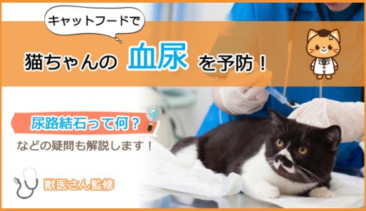 血尿が出てしまう猫のキャットフードの選び方とおすすめランキング!