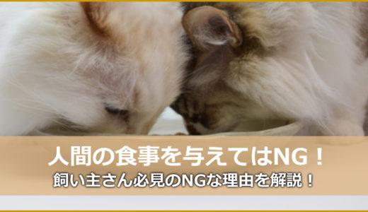 人間の食べ物を猫ちゃんに食べさせない方が良い3つの理由!